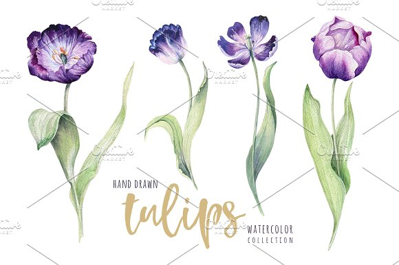 Watercolor violet tulips in Illustrations - product preview 1