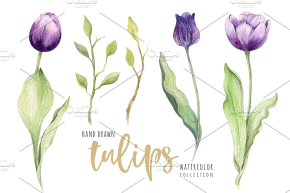 Watercolor violet tulips in Illustrations - product preview 2