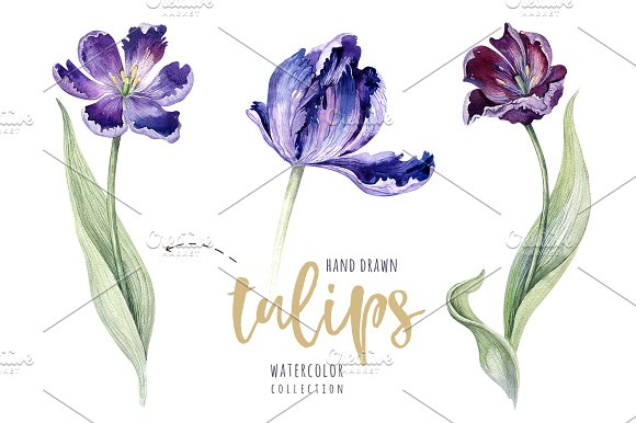 Watercolor violet tulips in Illustrations - product preview 3
