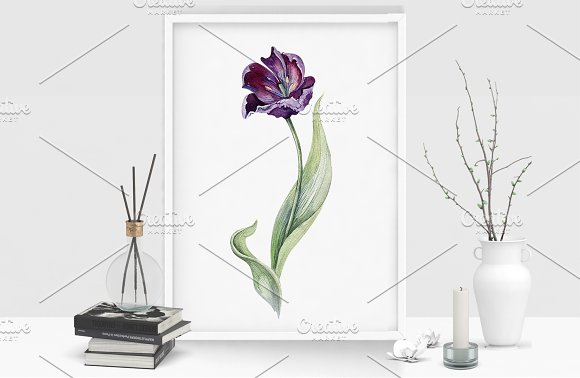Watercolor violet tulips in Illustrations - product preview 4