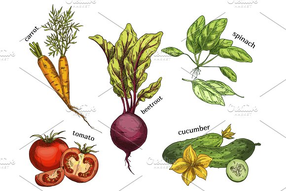 Sketches for carrot and tomato, cucumber, beetroot