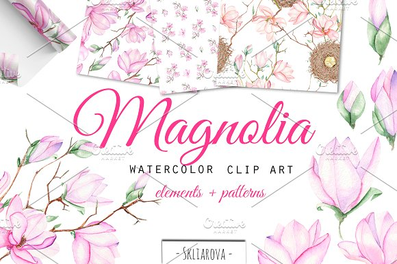 Spring Magnolia. Watercolor clip art in Illustrations