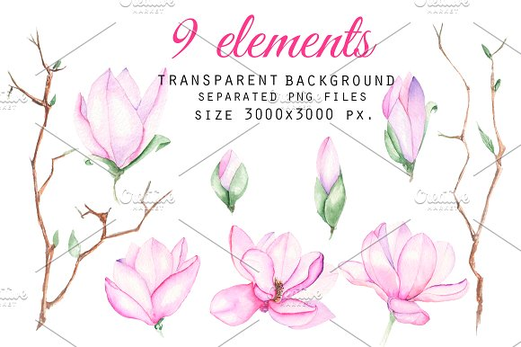 Spring Magnolia. Watercolor clip art in Illustrations - product preview 1