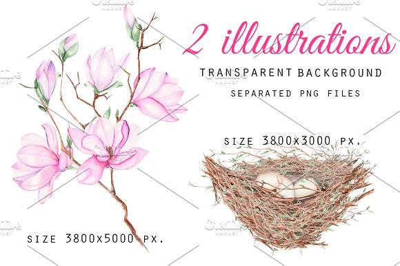 Spring Magnolia. Watercolor clip art in Illustrations - product preview 2