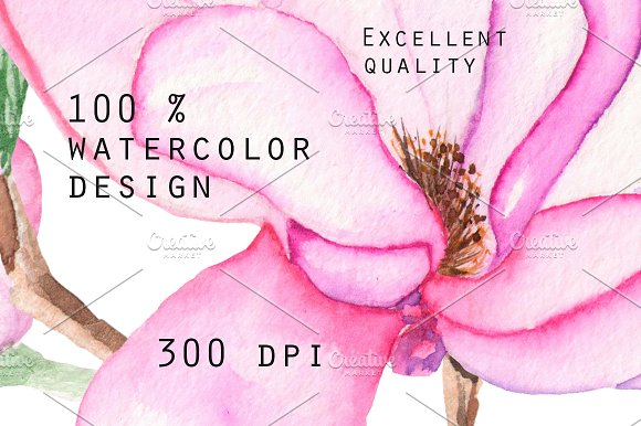 Spring Magnolia. Watercolor clip art in Illustrations - product preview 5