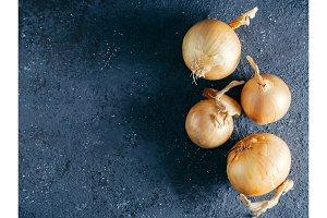 onion on dark blue background