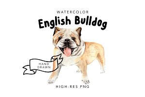 Watercolor Dog Portrait: Bulldog