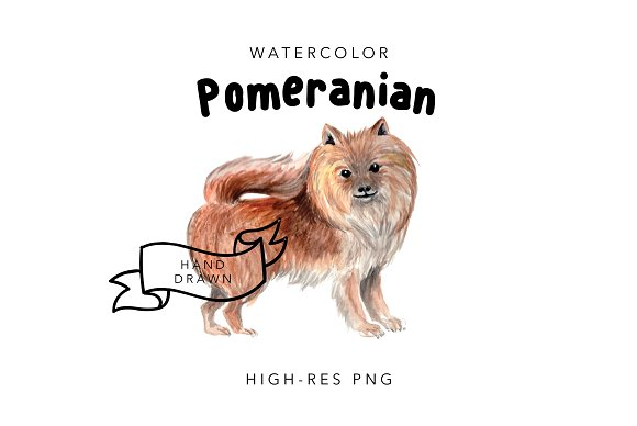 Pomeranian: Watercolor Dog Drawing