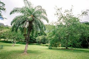 Palm Tree Hawaii