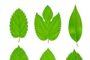 Green Leaves Isolated Set