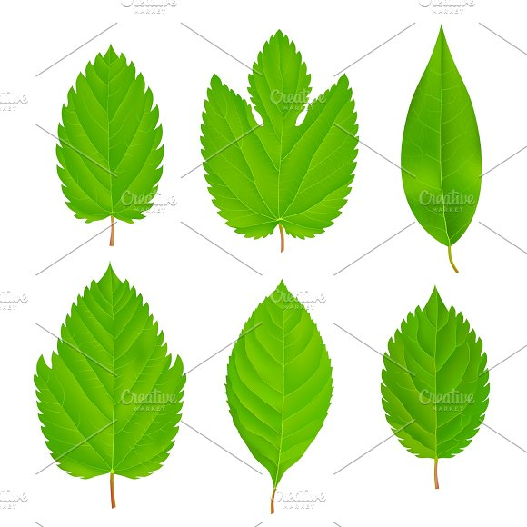Green Leaves Isolated Set in Graphics