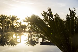 Palm branches. Sunrise