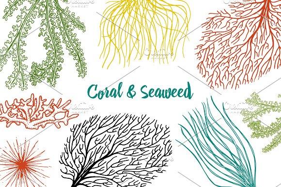 Marine Plants Seaweed Sea Life