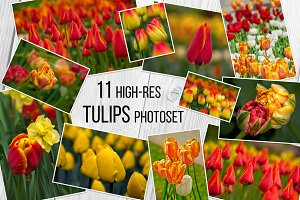 Tulips Photoset 11 Images