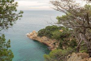 The wild coast