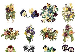 Pansy Assortment - 12 PNG Images