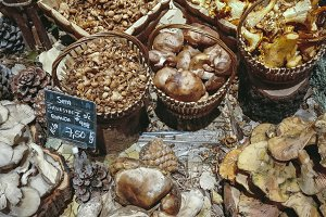Many different edible mushrooms