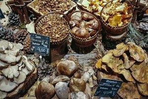 different edible mushrooms in basket