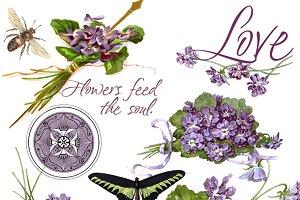 Vintage Violets - PNG Image Set