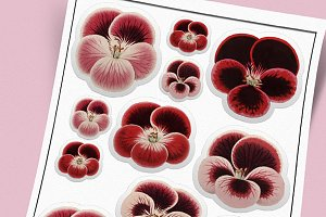 Pretty Pansies - Digital Sticker Set