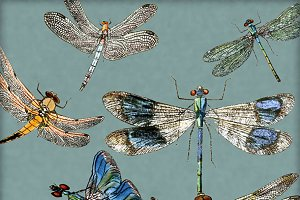 Vintage Dragonfly Digital Image Set