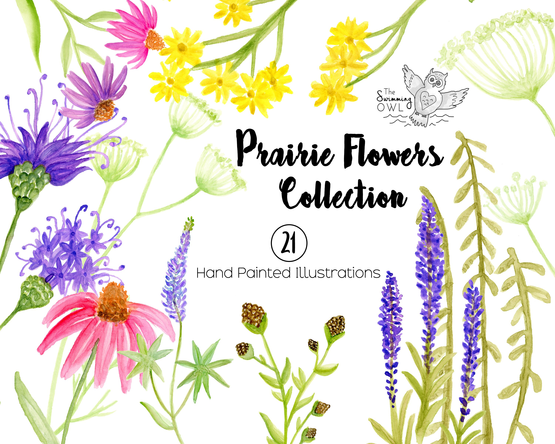 Prairie Flowers Watercolor Clipart ~ Illustrations ...