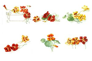 Nasturtium Digital Floral Images Set