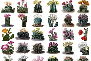 Desert Cactus Clipart 34 PNG Images