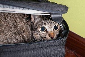 Funny cat portrait