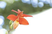 Orchid spring.jpg