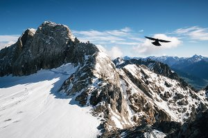 Bird flies over Dachstein glacier