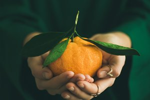 Fresh raw tangerine fruit in hands of lady, copy space