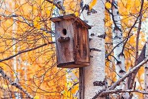 nesting box on a birch
