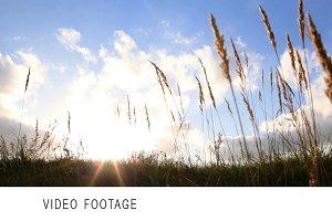 Grass and sky.