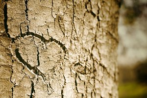 Heart shape on tree bark of a public