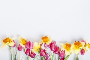 Yellow daffodils and  pink tulips in
