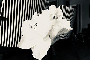 White Lilies with Stripe BG - BW