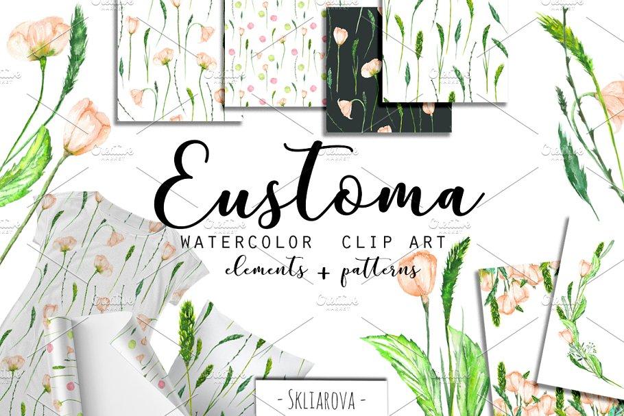 Eustoma Spring. Watercolor clip art.