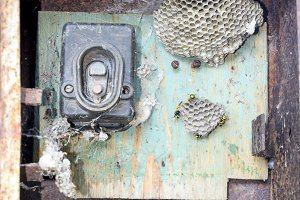 Nest of wasps in the old electrical switchboard. Wasp polist.