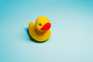 a toy for playing in the bathroom. the duckling is yellow. background blue