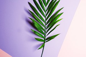 tropical leaf. background gradient. view from above