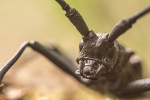 Beetle close-up
