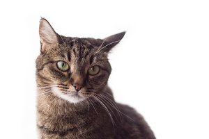 Cat with smart eyes on a white background