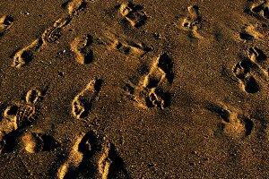footprints in the beach sand