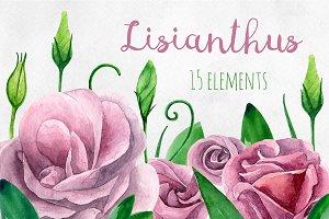 Watercolor lisianthus clip art