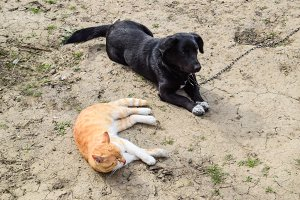 A red cat and a black dog are lying side by side