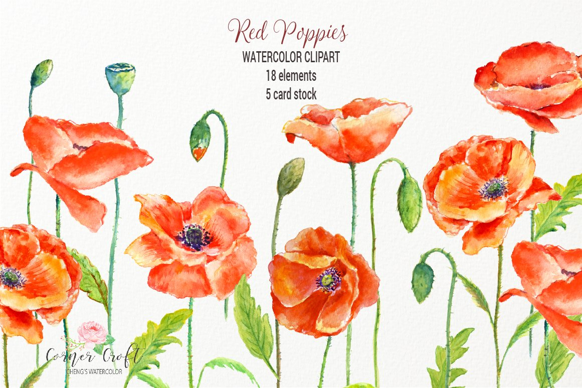 Watercolor Red Poppy Clip Art Illustrations Creative Market