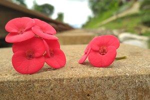 Macro Flower Photo