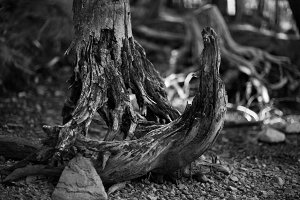 Black and White Eroded Tree Stump