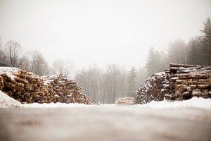 Winter Snow Scene with Logs